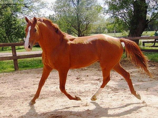Типы лошадей