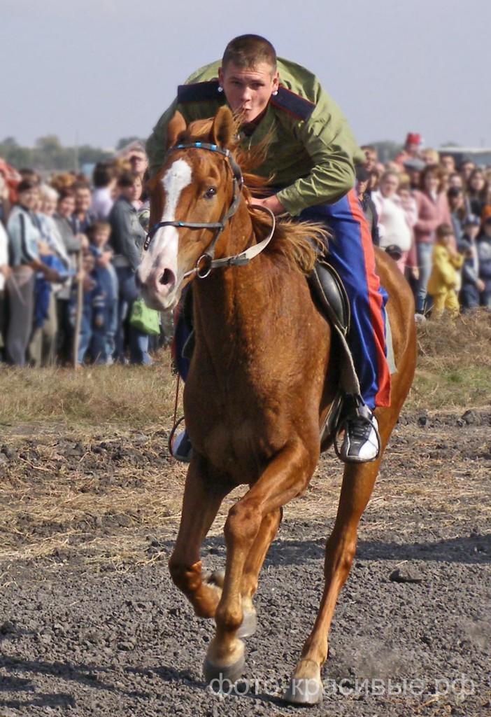 Описание донских лошадей