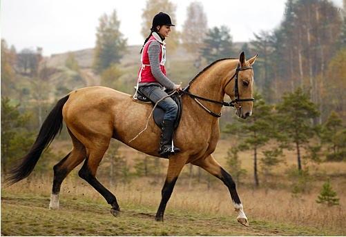 Разведение коней ахалтекинской масти