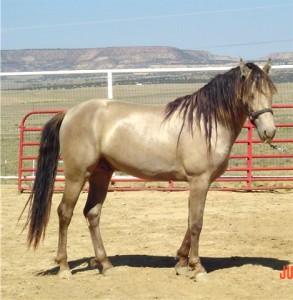 лошадь соболиной масти