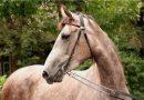 Красно-серая масть лошадей