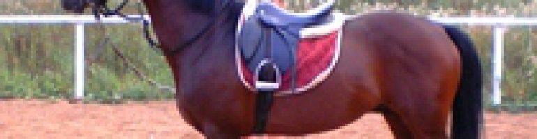 Кроваво-гнедая масть лошадей