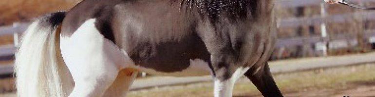 Вороно-пегая масть лошади