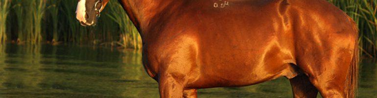 Рыжая масть лошадей