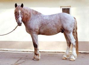 Гнедо-чалая лошадь