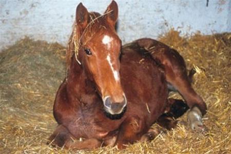 Грипп лошадей: вакцина, диагностика, симптомы, лечение и профилактика