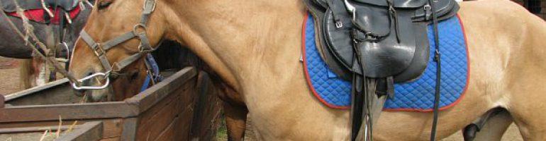 Каурая масть лошадей