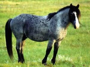 Фото вороно-чалой лошади