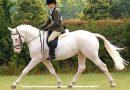 Доминантная масть лошадей