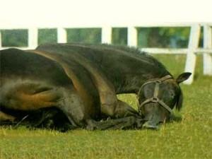 колик у лошади