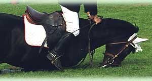 травмы у лошадей