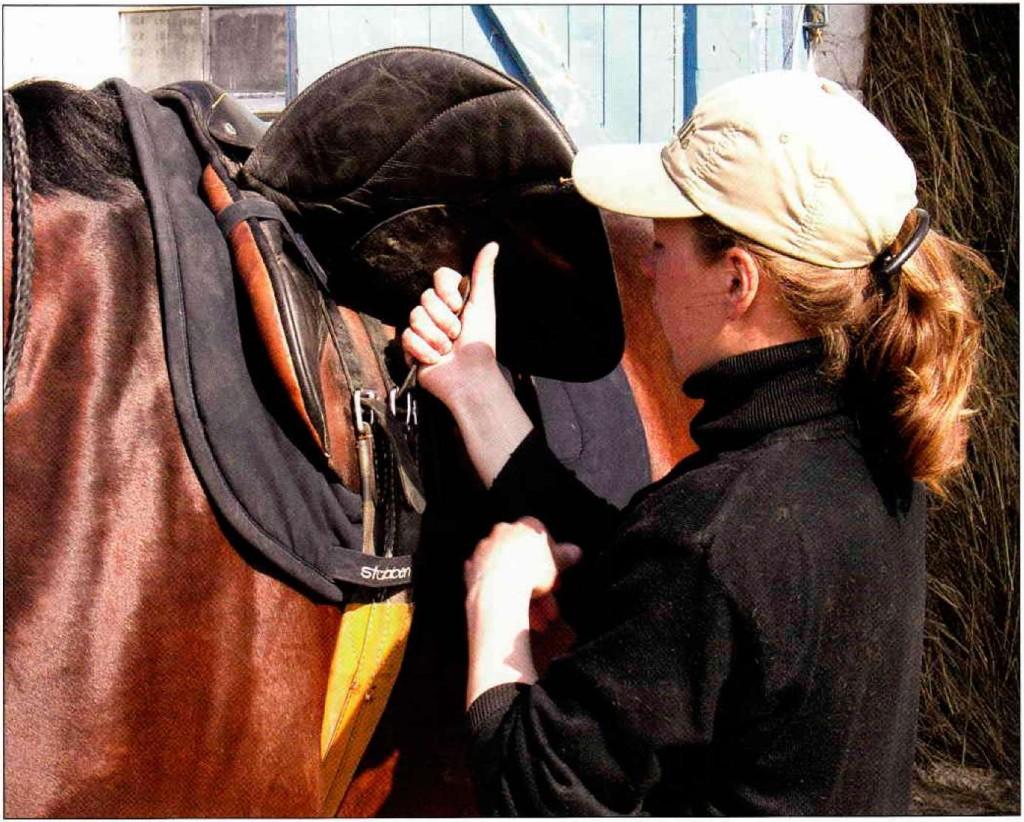 Скаковые седла не имеют отношение к конному спорту