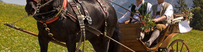 Абтенайская порода лошадей