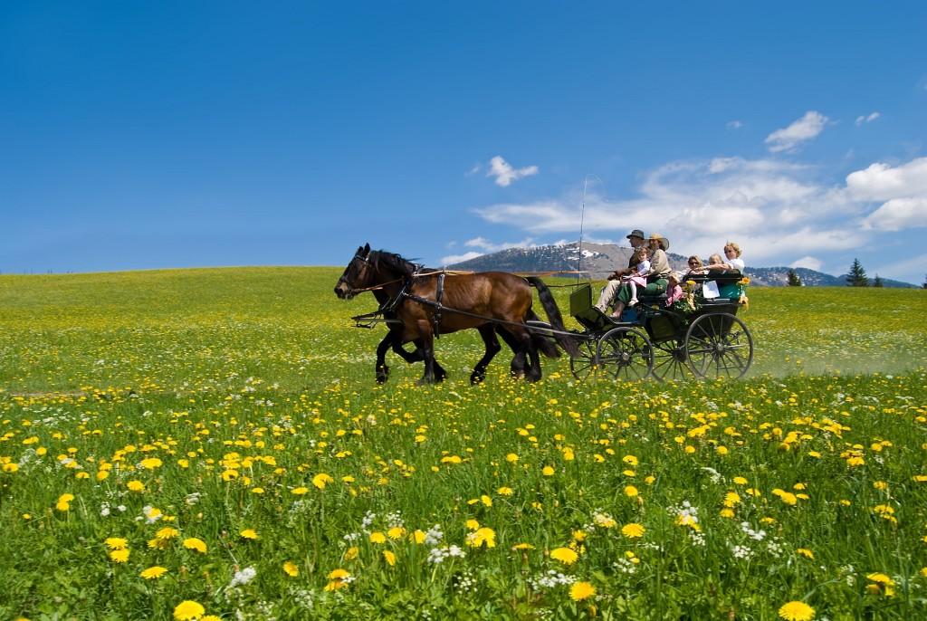 Абтенайские лошади в упряжи, фото