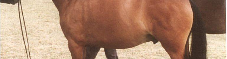 Австралийский пони