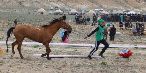 Адаевкая лошадь, фото