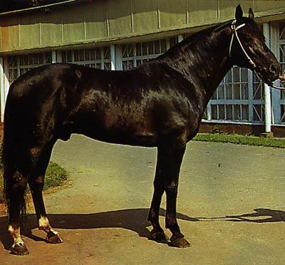 Адаевская порода лошадей, фото