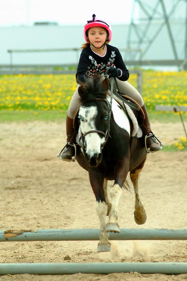 Американский верховой пони в процессе обучения езде, фото