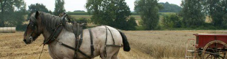 Арденская порода лошадей