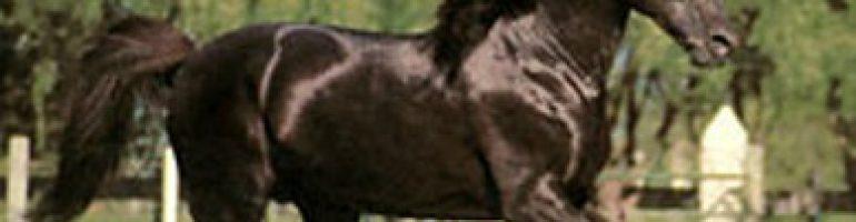 Ацтекская порода лошадей