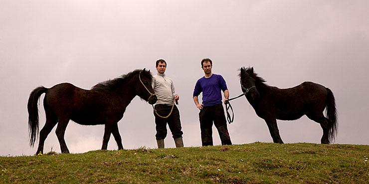 Баскские пони с наездниками, фото