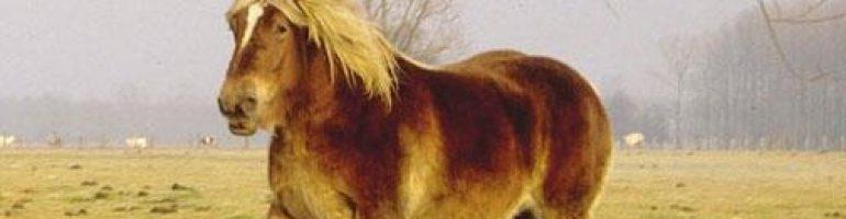 Битюг — русская порода тяжеловозных лошадей