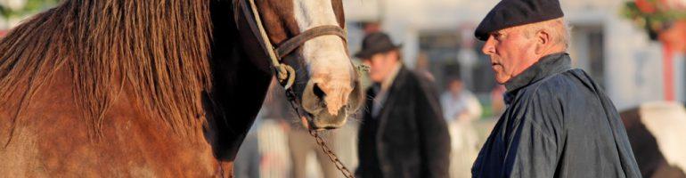 Бретонская тяжеловозная порода лошадей