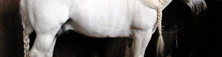 Булонская порода лошадей, фото