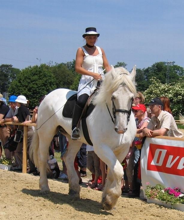 Булонская лошадь с наездником, фото