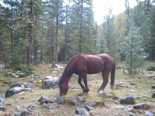 Бурятская лошадь, фото
