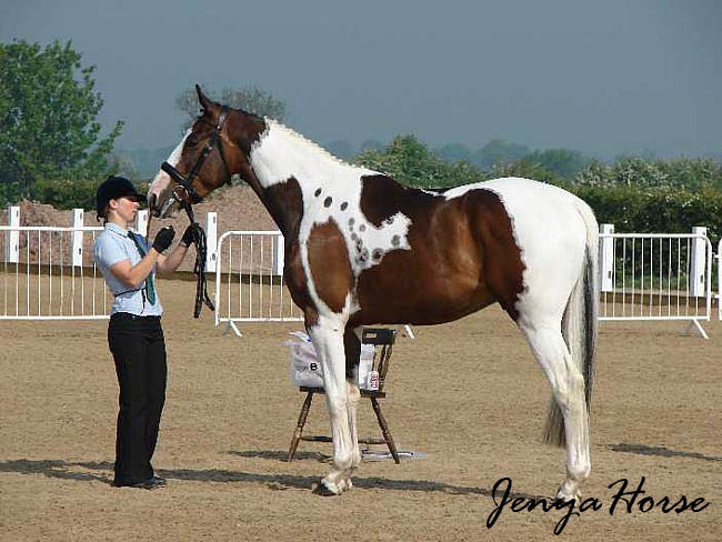 Великопольская лошадь, фото