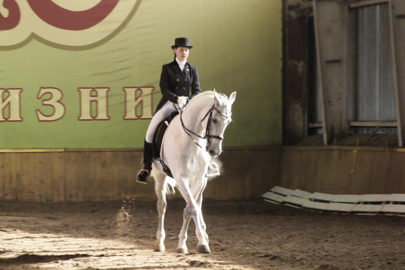Венгерская теплокровная лошадь с наездником, фото