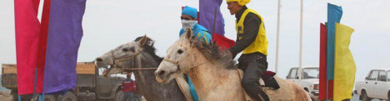 Адаевская порода лошадей