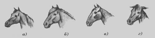 Уши лошади, фото