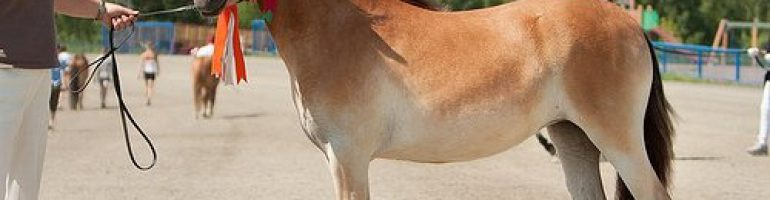 Готландский пони или скогсрусс