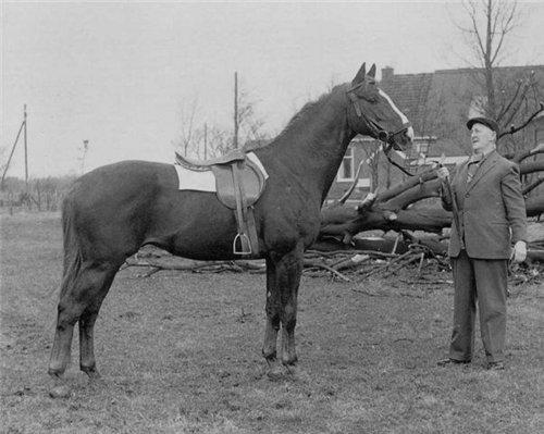 Гронингенская лошадь в стародавние времена, фото