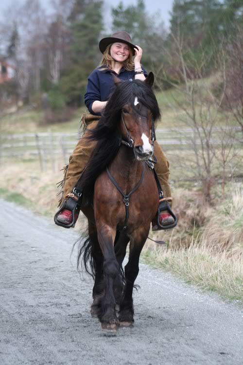 Гудбрансдальская упряжная лошадь с наездницей, фото