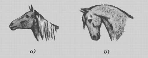 Затылки лошади, фото