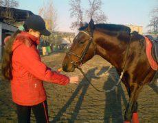 Лошади породы карабаир