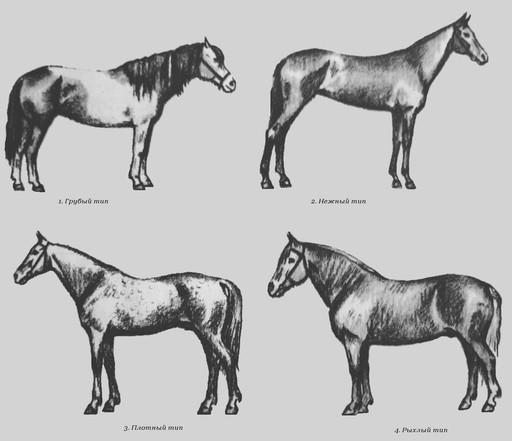 Конституция лошади, фото