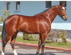 Русский рысак порода лошади