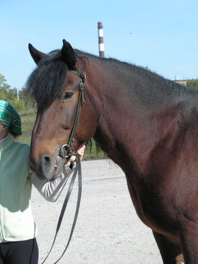 Кузнецкая лошадь, фото