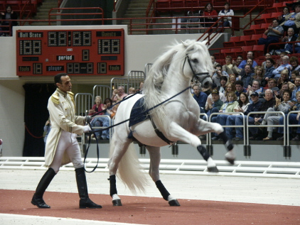 Липпицанская лошадь, фото