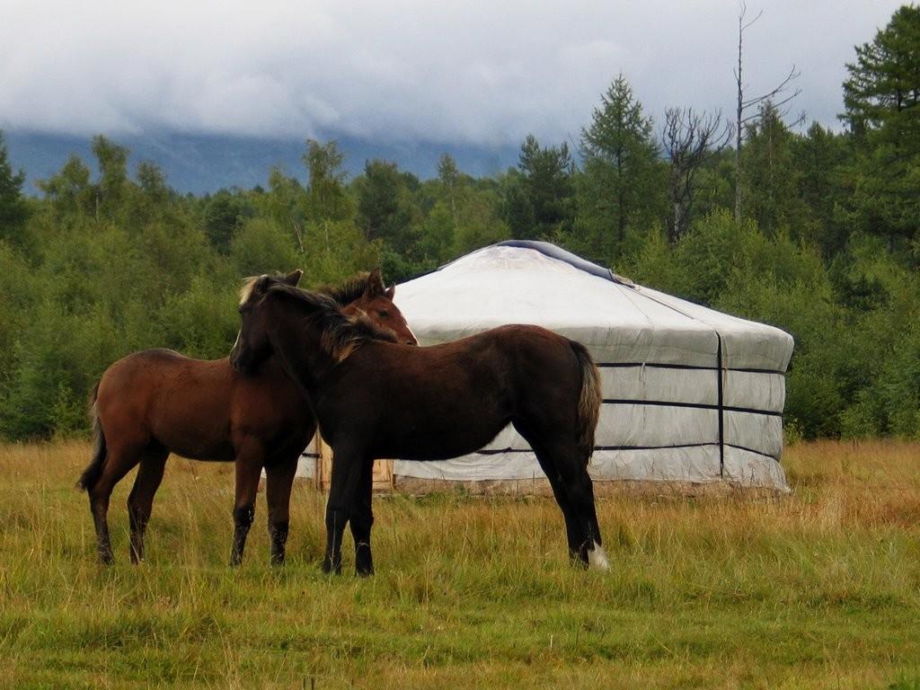 Лошади Бурятской породы, фото