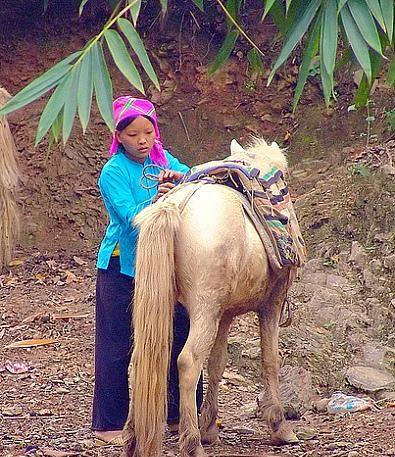 Лошади породы вьетнамский хмонг, фото