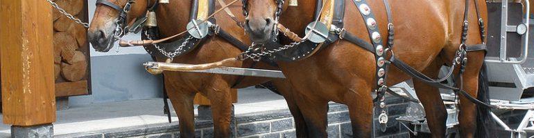 Лошади породы фрайбергер