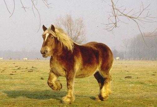 Лошадь Битюг, фото