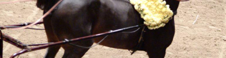 Порода лошадей Хакнэ