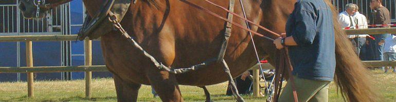 Лошади породы Бретонец