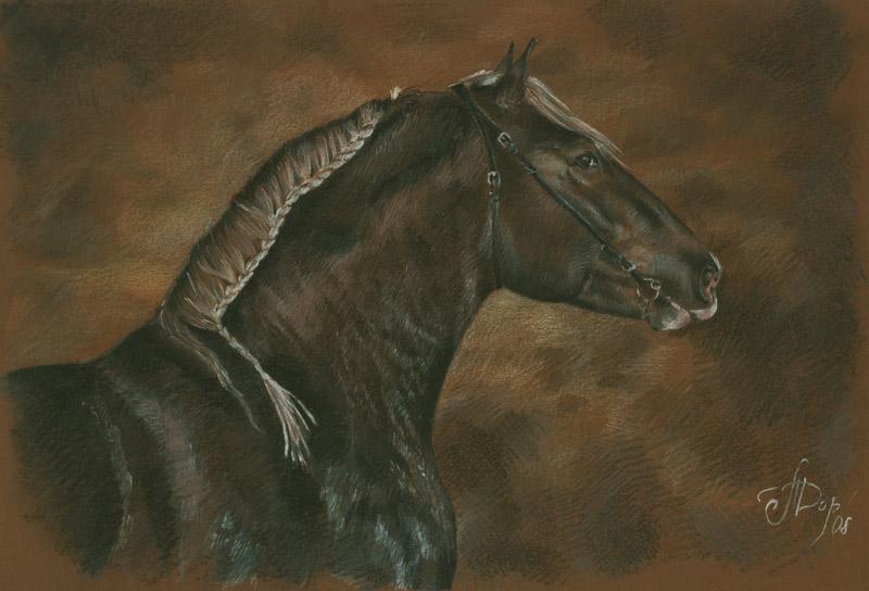 Лошадь породы Бретонец, фото